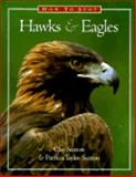 How to Spot Hawks and Eagles, Clay Sutton and Patricia Sutton, 1576300013