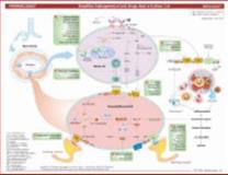 MemoCharts Pharmacology : Drug Therapy for Asthma (Review Chart), Shen, Howard, 1595410120