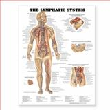 The Lymphatic System Anatomical Chart, Anatomical Chart Company Staff, 1587790254
