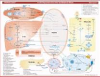 MemoCharts Pharmacology : Insulin and its metabolic effects (Review Chart), Shen, Howard, 1595410260