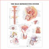 The Male Reproductive System Anatomical Chart, Anatomical Chart Company, 1587790300