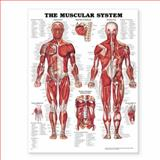 The Muscular System, Anatomical Chart Company Staff, 158779036X