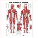 Giant Muscular System Chart, Anatomical Chart Company Staff, 1587790416