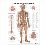 The Nervous System Anatomical Chart, Anatomical Chart Company Staff, 1587790440