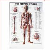 The Nervous System 3D Raised Relief Chart, Anatomical Chart Company Staff, 1587790505