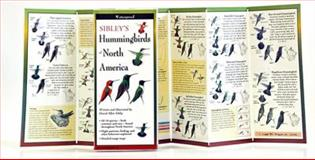 Sibley's Hummingbirds of North America, David Sibley, 1935380567