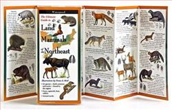 Land Mammals of the Northeast, , 1935380575