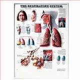 The Respiratory System 3D Raised Relief Chart, Anatomical Chart Company Staff, 1587790599