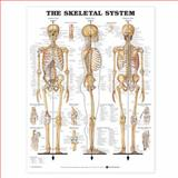 The Skeletal System 3D Raised Relief Chart, Anatomical Chart Company Staff, 1587790653