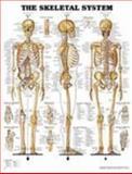 Giant Skeletal System Chart 9781587790669