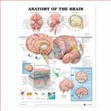 Anatomy of the Brain, Anatomical Chart Company Staff, 1587790890