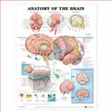 Anatomy of the Brain Anatomical Chart, Anatomical Chart Company Staff, 1587790904