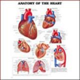 Anatomy of the Heart Anatomical Chart, Anatomical Chart Company Staff, 1587790947