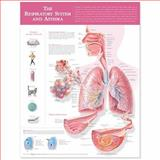 The Respiratory System and Asthma Anatomical Chart, Acc, 1605470996