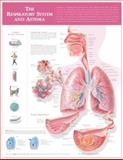 Respiratory System and Asthma, Anatomical Chart Company, 1605471003