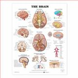 The Brain Anatomical Chart, Anatomical Chart Company Staff, 1587791056