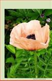 Poppy 2014 Weekly Calendar, K. Rose, 149429107X
