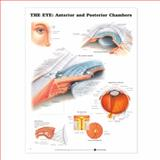 The Eye - Anterior and Posterior Chambers Anatomical Chart, Anatomical Chart Company Staff, 1587791331