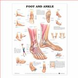 Foot and Ankle, Anatomical Chart Company Staff, 1587791382