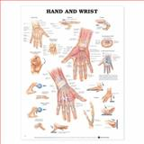 Hand and Wrist, Anatomical Chart Company Staff, 1587791439