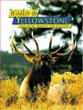 WildLife @ Yellowstone, Sue Consolo-Murphy and Kerry Murphy, 0887141498