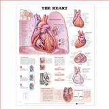 The Heart Anatomical Chart, Anatomical Chart Company Staff, 1587791528