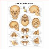 The Human Skull Anatomical Chart, Anatomical Chart Company Staff, 1587791676