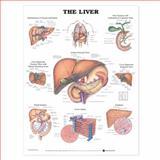 The Liver 9781587791765