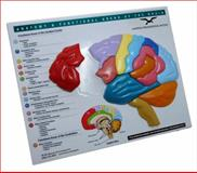 Anatomy and Functional Areas of the Brain, Norton Professional Books Staff, 0393732894