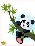 WriteDrawDesign Blank/College Ruled 8. 5 X 11 Notebook, Panda Hanging on a Tree, WriteDrawDesign, 1499792891