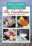 Reef Fishes, Corals and Invertebrates of the Caribbean : A Diver's Guide, Wood, Elizabeth and Wood, Lawson, 0658013092