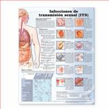 Sexually Trans Infection Spanish Paper, Anatomical Chart Company Staff, 0781773415