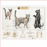 Feline Skeletal System Anatomical Chart, Anatomical Chart Company Staff, 1587793938
