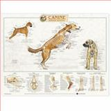 Canine Skeletal System Anatomical Chart, Anatomical Chart Company Staff, 1587793970