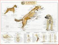 Canine Skeletal System Anatomical Chart, Anatomical Chart Company Staff, 1587793989