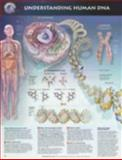 Understanding Human DNA Anatomical Chart, Anatomical Chart Company Staff, 1587794144