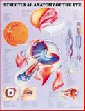 Structural Anatomy of the Eye Anatomical Chart, Anatomical Chart Company Staff, 1587794349
