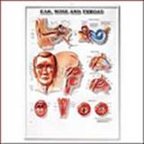 Ear, Nose and Throat Anatomical Chart, Anatomical Chart Company Staff, 1587794454