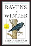 Ravens in Winter, Bernd Heinrich, 1476794561