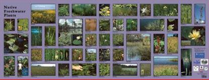 Native Freshwater Plants Photo Mural,, 097000463X