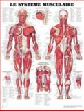 The Muscular System Chart in French, Anatomical Chart Company Staff, 1587795329