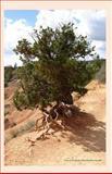 Tree in the Dunes 2014 Weekly Calendar, K. Rose, 1494295369