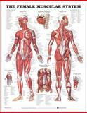 The Female Muscular System Anatomical Char 9781587795633