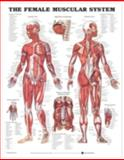 The Female Muscular System Anatomical Chart, Anatomical Chart Company Staff, 1587795655