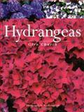 Hydrangeas, Glyn Church, 1552095711