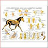 Equine Forelimb Joint and Ligament Wall Chart, Anatomical Chart Company Staff, 1587795868