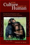 How Culture Makes Us Human : Primate Social Evolution and the Formation of Human Societies, Read, Dwight W., 1598745891