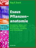 Esaus Pflanzenanatomie : Meristeme, Zellen und Gewebe der Pflanzen - Ihre Struktur, Funktion und Entwicklung, Esau, Katherine and Evert, Ray F., 3110205920