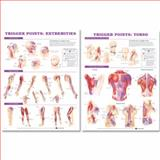 Trigger Point Chart, Anatomical Chart Company Staff, 158779621X