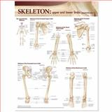 Anatomy Skeletal System : Upper and Lower Limbs, Anatomical Chart Company, 0781786533